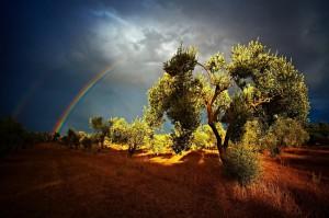 02_Hubert Polacek_Duha v olivovom haji